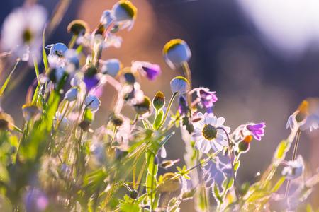 Sunny meadow Stok Fotoğraf