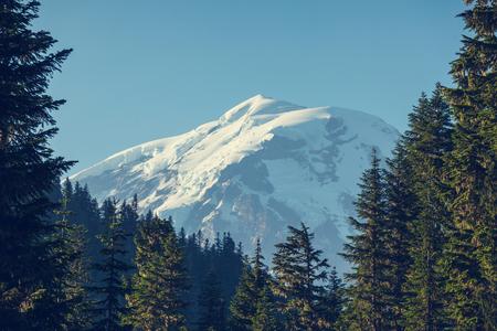mount rainier: Mount Rainier national park in Washington