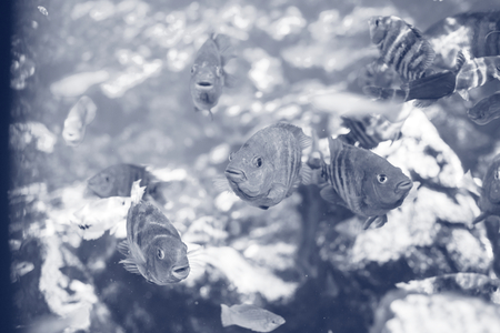 hardcoral: fish under water Stock Photo
