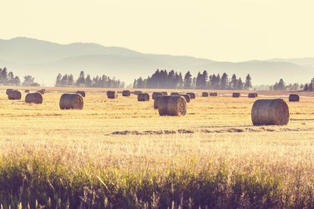 farm landscape: Hay