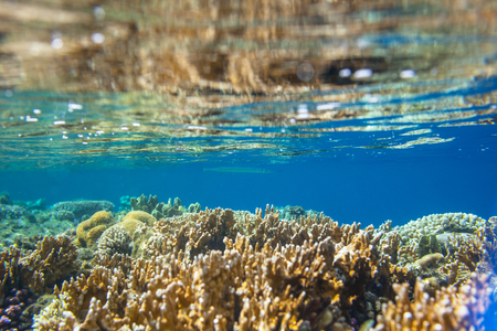 beneath the surface: Coral reef in Red Sea Egypt Stock Photo