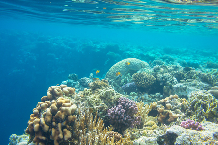 red sea: Coral reef in Red Sea Egypt Stock Photo