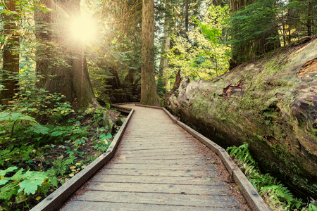 boardwalk in forest Stock Photo