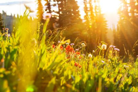Mountain meadow in sunny day Stok Fotoğraf