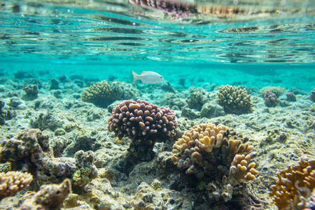 red sea: Coral reef in Red Sea, Egypt