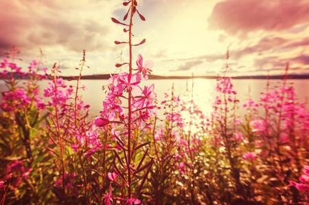 alaska: Meadow in Alaska Stock Photo