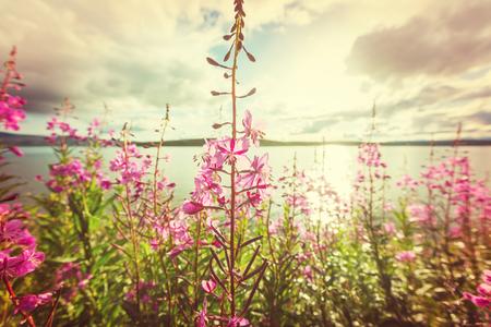 Meadow in Alaska Stok Fotoğraf