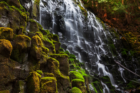 forest background: Ramona falls in Oregon,USA