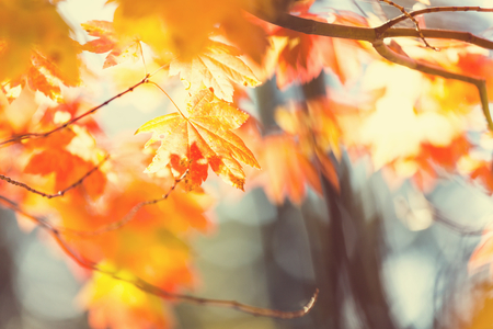 秋のカラフルな葉 写真素材