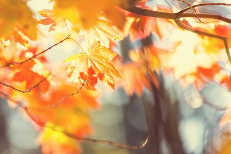 autumn leaves falling: Colourful leaves in autumn season