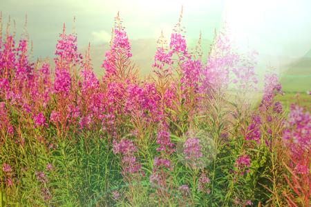 Meadow in Alaska Stock Photo