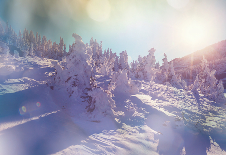 winter sunrise: Winter mountains