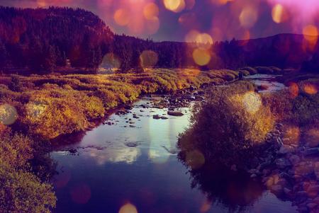 naranjo arbol: La cala del bosque en otoño Foto de archivo