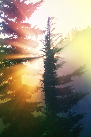 green environment: Sunny beams in forest