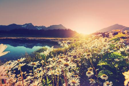 晴れた日の山の牧草地