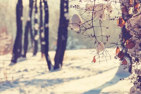 paisaje: Escena del invierno