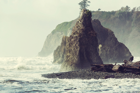 shore: Olympic National Park landscapes Stock Photo