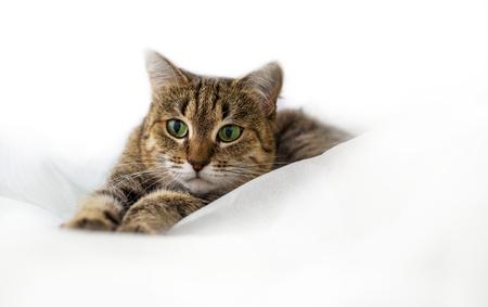Katze Standard-Bild - 45517374