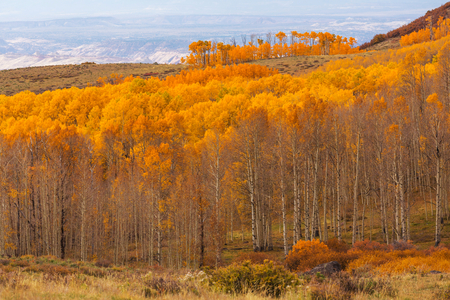 mountain landscape: The forest in autumn
