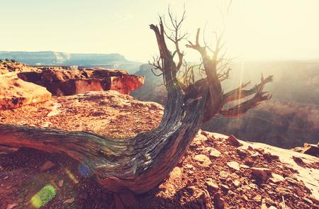 grand canyon national park: Grand Canyon landscapes Stock Photo