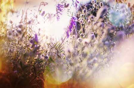 flores: Summer flowers on the foggy meadow