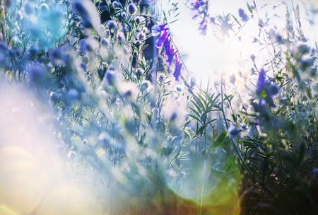 mystical: Summer flowers on the foggy meadow