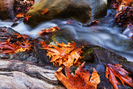 creek: The forest creek in autumn Stock Photo