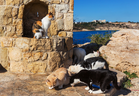 moggy: Cats in Cyprus