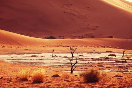 parch: Dead Valley in Namibia Stock Photo