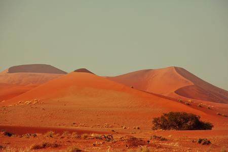 parch: Sand dunes in Namib desert Stock Photo