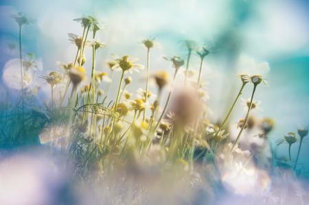 Chamomile meadow Banco de Imagens