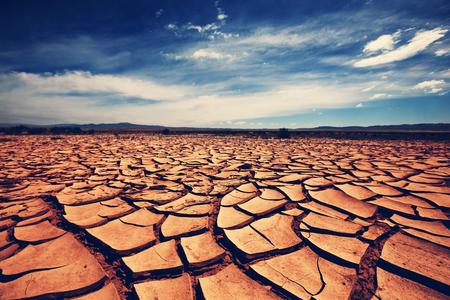 砂漠の乾燥地帯