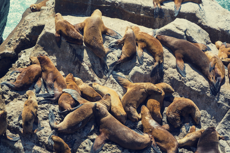 lions rock: Sea lions overlie on stone