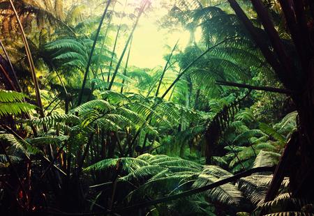 selva: Selva en Hawaii Foto de archivo