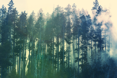 woodland  horror: Magic mist in the forest Stock Photo