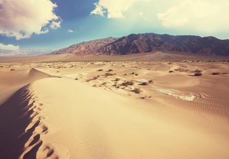 desierto: Paisaje del desierto