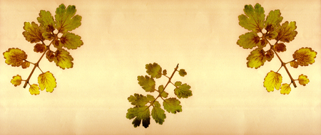 botanical farms: Summer background with tree leaves
