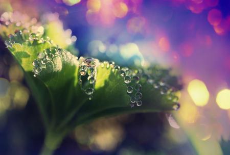 frash: Drops on leaves