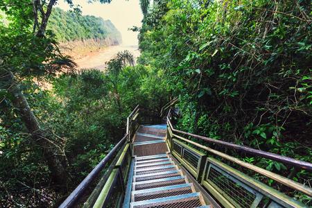 boardwalk trail: Wooden boardwalk in the forest
