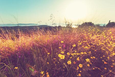 夏の花の牧草地 写真素材