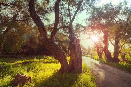 arboleda: Olive Garden
