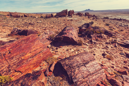 sarmiento: Petrified wood in Patagonia, Argentina