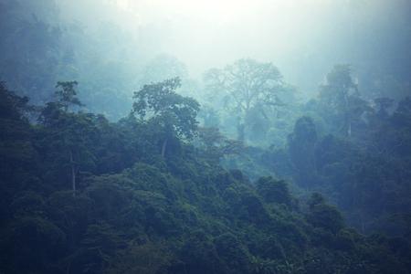 filters: Jungle in Hawaii