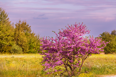 blossoming: Blossoming tree in the Spring Stock Photo
