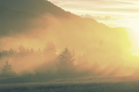 tree farming: Rural landscapes at sunrise