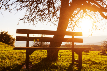 serenity: Serenity spring garden at sunrise