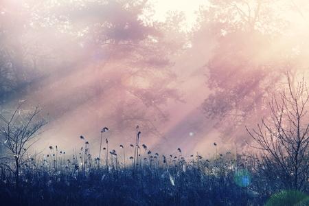 fog: Fog on the meadow