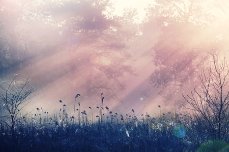 field sunset: Fog on the meadow