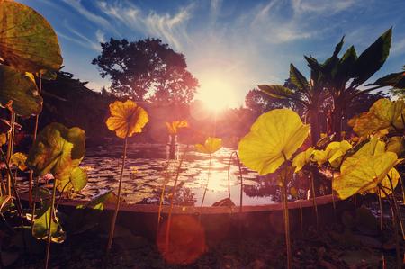Tropical garden Banco de Imagens