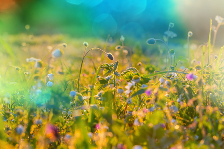 filters: Sunny day in the meadow